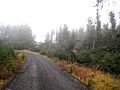 Forest road in Scotch mist - geograph.org.uk - 644332.jpg