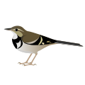 Forestwagtail.svg