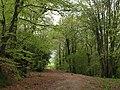 Former main road, Ideford (2) - geograph.org.uk - 1281935.jpg