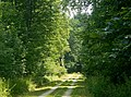 Forstweg - panoramio (12).jpg