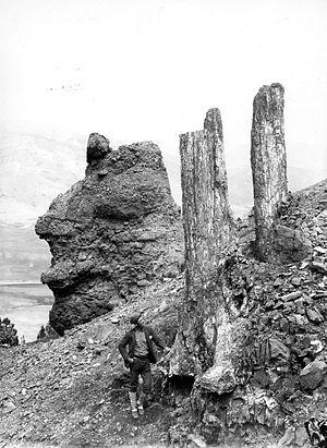 Specimen Ridge - Image: Fossil Trees Specimen Ridge YNP1890
