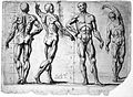 Four male écorchés or partially flayed figures. The first an Wellcome L0018984.jpg