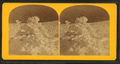 Frolic snow architecture, from Robert N. Dennis collection of stereoscopic views.png