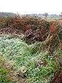 Frosty hedgerow - geograph.org.uk - 1077705.jpg