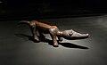 Frottoir Kuba-Musée ethnologique de Berlin.jpg