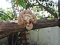 Fungi-107-xavier cottage-yercaud-salem-India.jpg