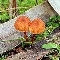 Fungi love (394578526).jpg