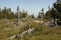 Góry Izerskie - panoramio (6).jpg