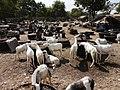 Gambia01SouthGambia060 (5380052625).jpg