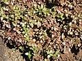 Gardenology.org-IMG 0386 hunt07mar.jpg