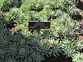 Gardenology.org-IMG 0408 hunt07mar.jpg