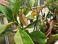 Gardenology.org-IMG 2014 hunt08sep.jpg