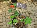 Gardenology.org-IMG 8026 qsbg11mar.jpg