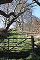 Gate and trees, Downpatrick, March 2010.JPG