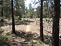 General Crook Trail, Payson, AZ 85541, USA - panoramio (2).jpg