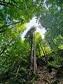 Giessbach - forêt.jpg