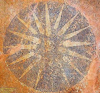 Gitanae - Image: Gitanae Vergina Sun Mosaic