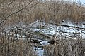 Gog-le-hi-te-wetlands 02-17 20.jpg