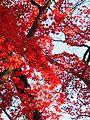 Gotokuji Temple (25157704945).jpg