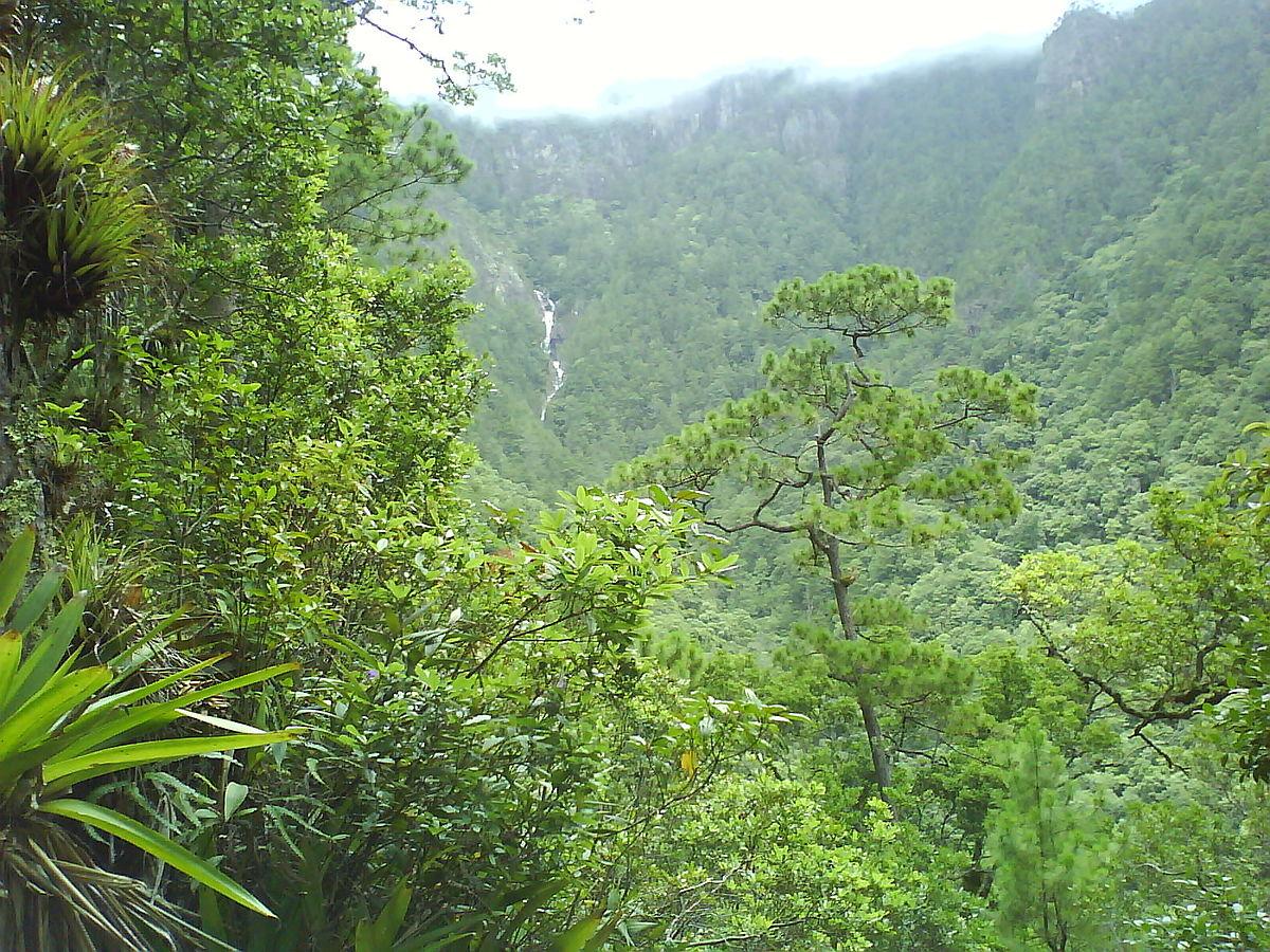 Bosque de montaña - Wikipedia, la enciclopedia libre