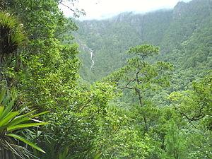 Image result for selva de montaña