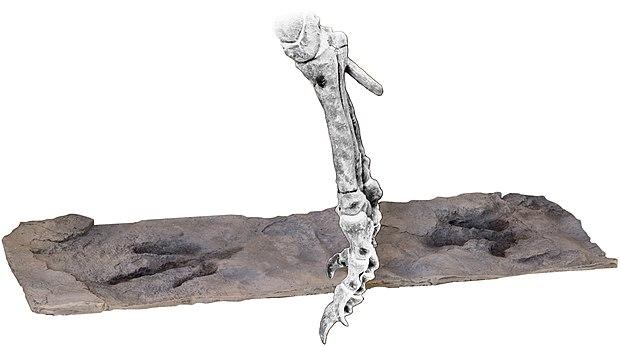 datazione assoluta di rocce e fossili 8,4
