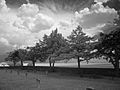 Graveyard, Ft Reno, OK (4245551628).jpg