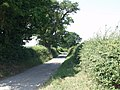 Great Oaks line the lane at Henlle - geograph.org.uk - 200718.jpg