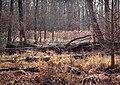 Great Swamp National Wildlife Refuge, December.jpg