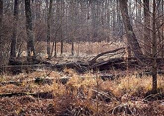 Great Swamp National Wildlife Refuge - Image: Great Swamp National Wildlife Refuge, December