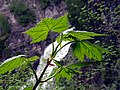 Green Leaves and Waterfall.jpg