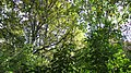 Green flame. September 2015. - Зелёные заросли. Сентябрь 2015. - panoramio.jpg