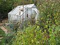 Greenhouse - Flickr - peganum (1).jpg