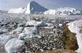 Greenland Ilulissat-38.jpg