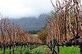 Groot Constantia - panoramio (2).jpg