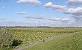 Gruendeich 2007 Plantage Aussendeich by-RaBoe 01.jpg