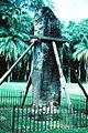 GuateQuake1976QuiriguaStelaBrace.jpg