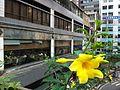 HK 上環 Sheung Wan 水坑口街 Possession Street footbridge yellow flower Nov-2013 view Arion Commercial Centre.JPG