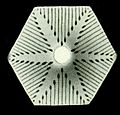 Haeckel Amphoridea-5c.jpg