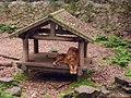 Hangzhou Zoo 34.jpg