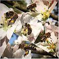 Hardworking honeybee collage.jpg