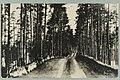 Harjutie, Harjutien korkea osa, Tarkemmin määrittelemätön paikka, 1920s PK0123.jpg