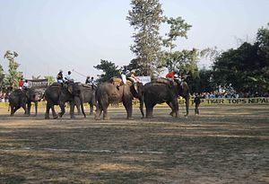 Elephant polo - Elephant polo World cup 2012 in Meghauli, Nepal