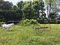 HenryCo Pasture.jpg