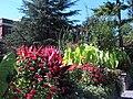 Hillwood Gardens in September (21473518639).jpg