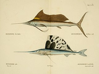 Istiophoriformes order of fishes