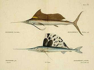 Istiophoriformes - Image: Histoire naturelle des poissons (10438720485)