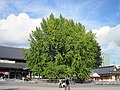 Hongan-ji National Treasure World heritage Kyoto 国宝・世界遺産 本願寺 京都460.JPG
