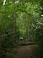 Hordle, White Croft Wood - geograph.org.uk - 1476174.jpg