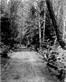Horse-drawn carriage on road through forest, May 30, 1899 (WASTATE 2561).jpeg